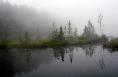 Algonquin park lake in morning fog